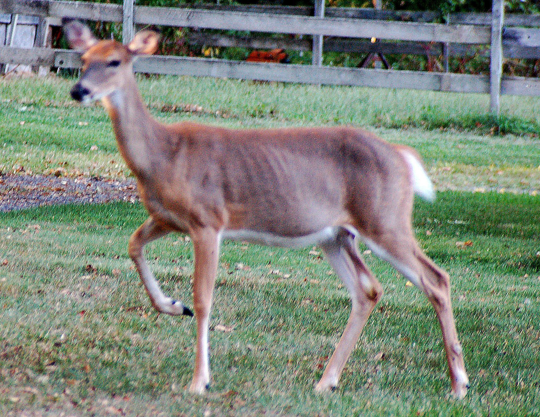 Wessex Deer Management